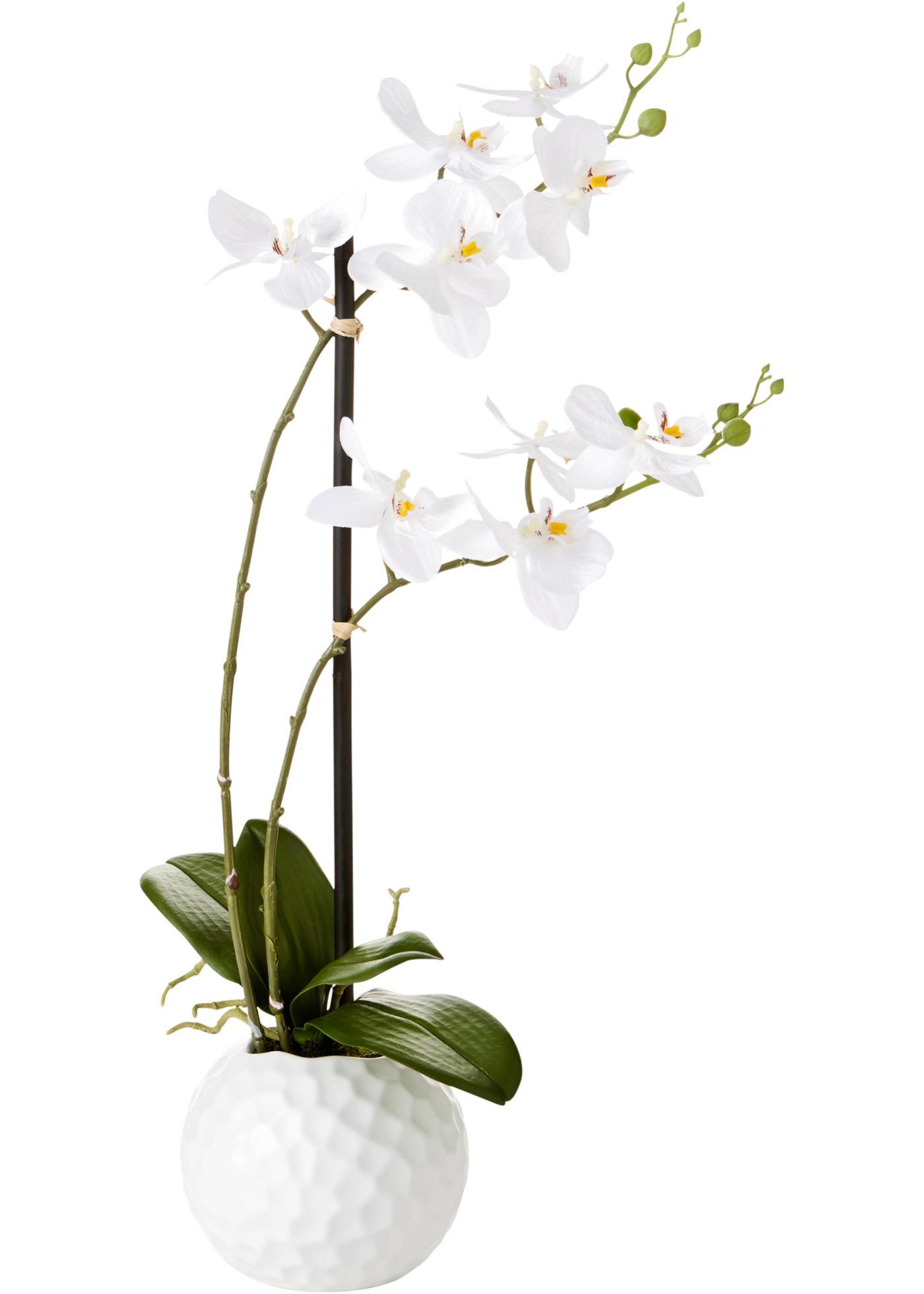 Achat vase d coration maison et jardin discount page 2 for Plante artificielle castorama