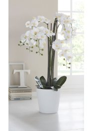 Orchidée artificielle XXL, bpc living bonprix collection