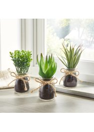 Succulentes artificielles en pot de verre (Ens. 3 pces.), bpc living bonprix collection