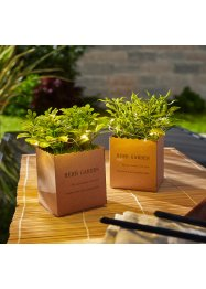 Plante artificielle LED en sachet (Ens. 2 pces.), bpc living bonprix collection